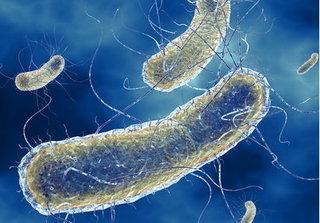 Những bệnh mắc phải do nhiễm vi khuẩn E.coli