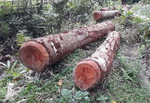 Cách chức trưởng ban tuyên giáo Quỳ Hợp vì phá rừng