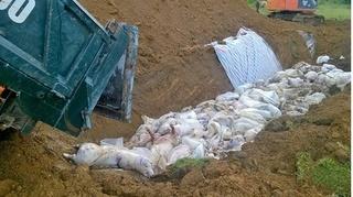 Thanh Hóa: Đã xử lý xong hàng nghìn con lợn bị chết đuối do lũ