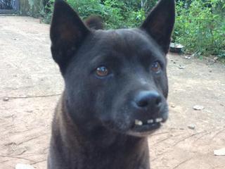 Nhìn vào chú chó