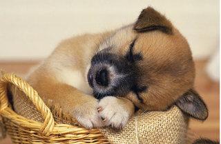 Cách trị nghẹt mũi cho chó cưng hiệu quả và an toàn