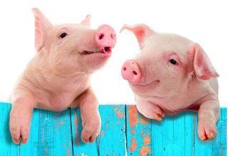 Giá heo hơi hôm nay 3/11: Giá lợn hơi mới nhất ổn định ở 3 miền