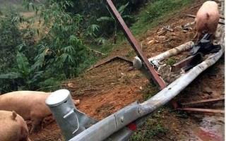 Sự thật câu chuyện người dân hôi của sau vụ xe chở lợn ở Lạng Sơn