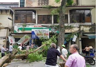 Hà Nội: Cây xanh bất ngờ gãy đổ, đè nát 1 ô tô và 3 xe máy