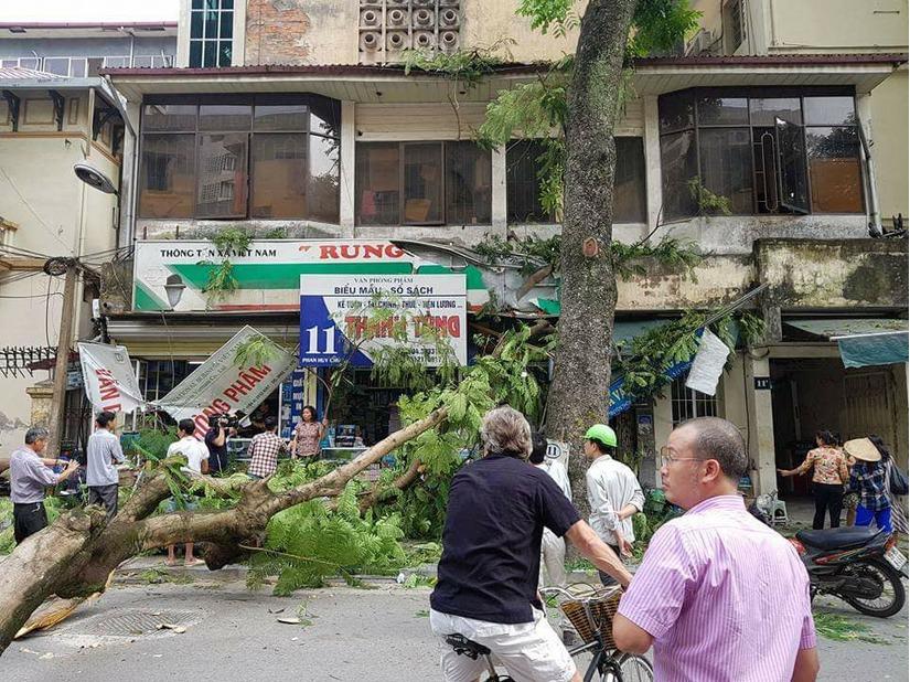 Cây xanh gãy đổ trên đường Phan Huy Chú đè bẹp 1 ô tô