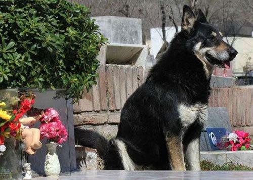 chú chó trung thành