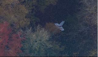 Chuyên gia giả thiết nguyên nhân tai nạn máy bay khiến phi công Việt tử nạn ở Anh