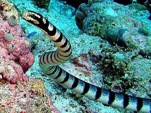 những loài rắn độc nhất hành tinh