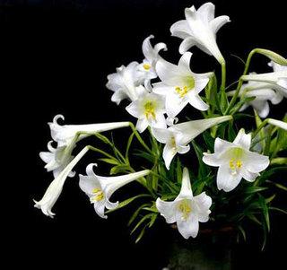Những loài hoa quen thuộc nhưng cực độc ít người biết