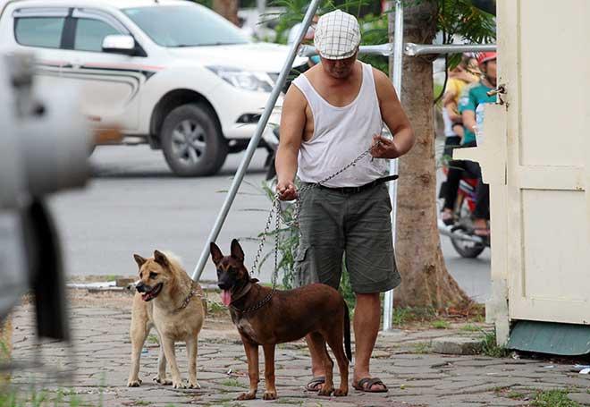 Nghệ An: Người nuôi chó phải đăng ký với UBND xã