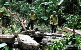 Nghệ An: Khởi tố, bắt giam hai trạm trưởng bảo vệ rừng