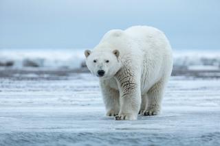 Kinh ngạc trước những loài động vật lớn nhất trên thế giới