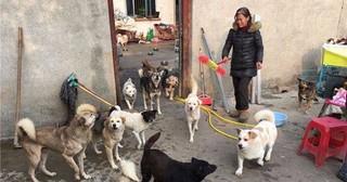 Bán hết nhà cửa, chấp nhận trắng tay để cứu mạng 130 con chó bị bỏ rơi