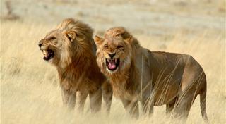 Những loài động vật ăn thịt đáng sợ nhất hành tinh