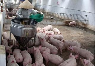 Dự báo giá heo hơi hôm nay 9/1: Giá lợn hơi mới nhất 37.000 đồng/kg