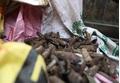 Hưng Yên: Phát hiện 2 tấn vật liệu nổ và đầu đạn tại vườn nhà dân