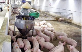 Dự báo giá heo hơi hôm nay 11/1: Giá lợn hơi mới nhất 37.000 đồng/kg