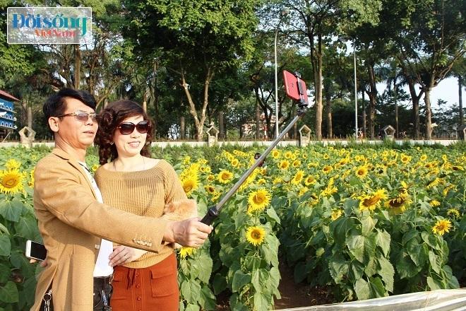 Giới trẻ Hà thành tự sướng bên vườn hoa hướng dương10