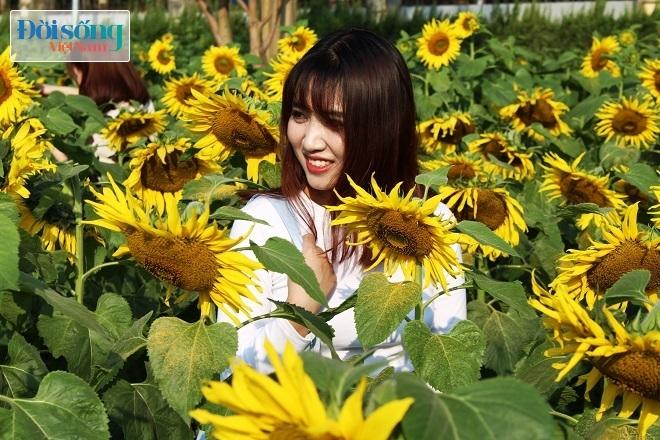 Giới trẻ Hà thành tự sướng bên vườn hoa hướng dương2