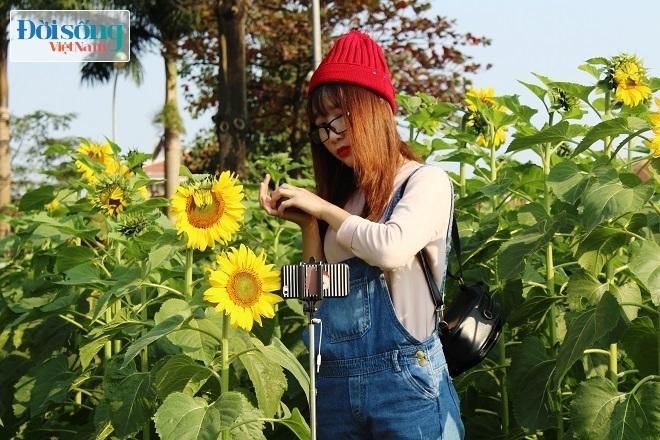 Giới trẻ Hà thành tự sướng bên vườn hoa hướng dương7