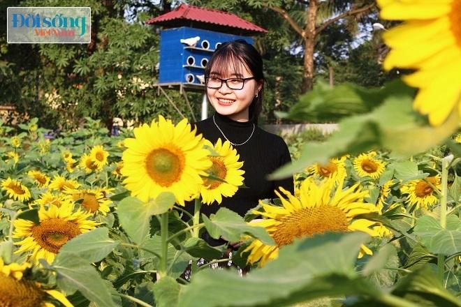 Giới trẻ Hà thành tự sướng bên vườn hoa hướng dương9