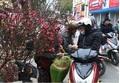 Đào quất tràn ngập phố phường Hà Nội những ngày giáp Tết