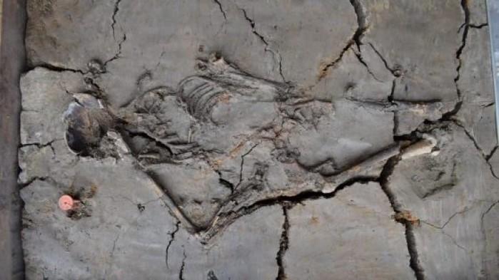 Hài cốt mẫu tử 6000 năm tuổi vừa được phát hiện