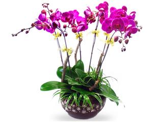 Những cây cảnh và hoa mang đến tài lộc, may mắn cho gia đình dịp Tết