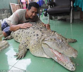 Người đàn ông Indonesia suốt hai thập kỷ sống chung với cá sấu khổng lồ