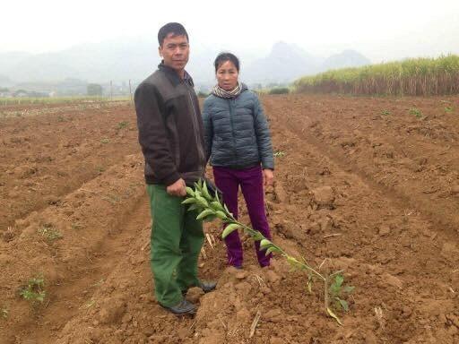 Hòa Bình: Một gia đình bị chặt phá gần 300 gốc cam