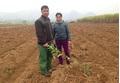 Hòa Bình: Một gia đình bị chặt phá gần 300 gốc cam ngày cận Tết