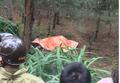 Thanh Hóa: Phát hiện thi thể người đàn ông Hàn Quốc ngoài rừng phi lao