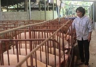 Dự báo giá heo hơi hôm nay 1/3: Giá lợn hơi mới nhất tăng nhẹ trước rằm tháng Giêng