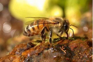 Kinh sợ trước những loài côn trùng nguy hiểm nhất hành tinh