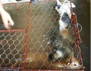 Chợ tiêu thụ thịt mèo ở Việt Nam lên báo nước ngoài với những hình ảnh đáng thương gây ám ảnh