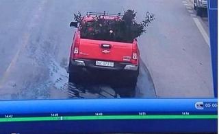 Vụ mất cây hoa hồng quý ở Sơn La: Công an nói gì về xe bán tải nghi trộm hoa?