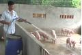 Say rượu, người đàn ông ở Yên Bái suýt mất mạng vì uống nhầm thuốc sát khuẩn khu chuồng nuôi