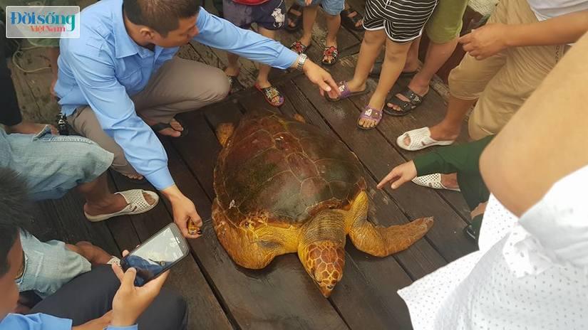 Hà Tĩnh: Thả cá thể rùa biển nặng 80kg về biển