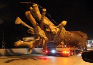 Sự thật về thông tin cây 'quái thú' được cho là của Thiếu tướng CSGT