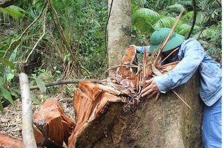 Vụ tàn phá rừng ở Quảng Nam: Đình chỉ công tác 6 cán bộ kiểm lâm