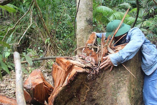 Đình chỉ công tác 6 cán bộ kiểm lâm sau vụ tàn phá rừng ở Quảng Nam