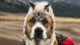 """Nửa triệu người follow cặp đôi """"chó - mèo"""" đi khắp thế giới"""