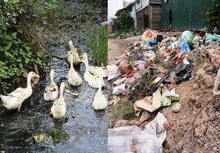 Hà Nội: Công trường đang xây dựng thành bãi chăn thả vịt và hút chích