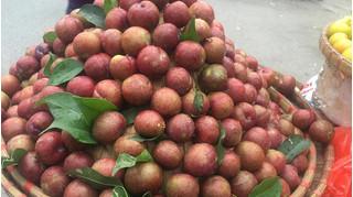 Mận hậu mất mùa, hàng rong 'hét' giá 270.000 đồng/kg