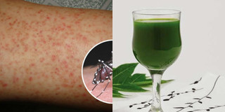 Nhiều người đột quỵ vì sốt xuất huyết: Đừng coi thường lá đu đủ trong vườn nhà bạn