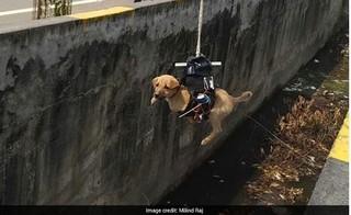 Tự chế robot gắp thú vì quá thương cún con nằm chờ chết dưới ống cống 2 ngày