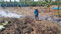 Cảnh báo nông dân đào rễ hồ tiêu bán sang Trung Quốc