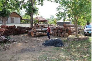 Kỷ luật hàng loạt cán bộ kiểm lâm vụ trùm gỗ lậu Phượng 'râu'