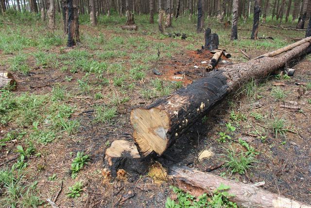 Công ty của vợ nguyên Phó Giám đốc Công an tỉnh phá rừng, bán đất