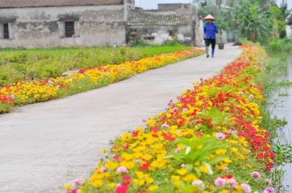 Con đường hoa khoe sắc rực rỡ ở làng quê Nam Định15